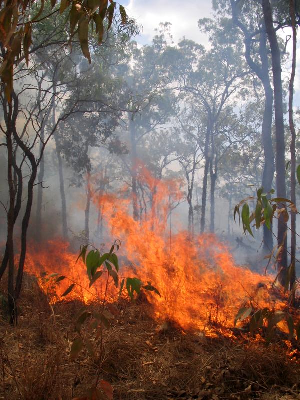 hazard-reduction-burn-rothwell